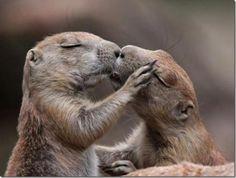 hier zie je twee verliefde dieren .