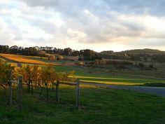 Colmar acres