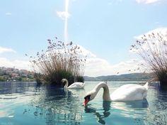 Λίμνη Καστοριάς Seasons In The Sun, Greek Names, Macedonia, Greece Travel, Planet Earth, Colours, Explore, Swans, Country