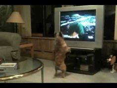 This cute dog gets so excited when she sees Santa on TV!