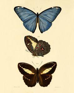 Butterfly Vintage art print Antique prints Wall art Natural history decor Butterflies art prints Home & Garden Nature art print 8x10 prints
