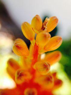 Aloe flowers West Coast, Aloe, Flower Power, South Africa, Landscape, Flowers, Plants, Scenery, Plant