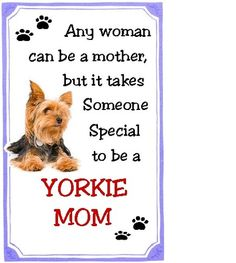 It takes someone special to be a Yorkie Mom. I love my Furbabies!