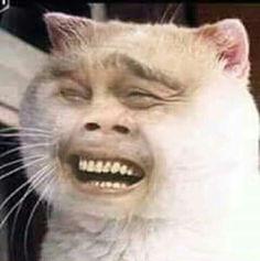 Cute Cat Memes, Cute Animal Memes, Funny Animal Pictures, Funny Animals, Cute Animals, Bad Memes, Stupid Funny Memes, Funny Photoshop, Curious Cat