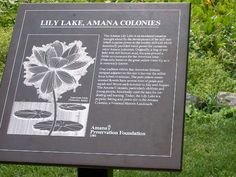 The Amana Lily Lake