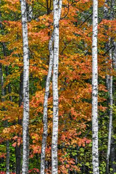 ***Autumn in Wisconsin by Kenneth Keifer / 500px