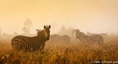Misty morning in Kruger National Park - BelAfrique - Your Personal Travel Planner - www.belafrique.co.za