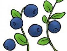 Marjojen hyötykäyttö-sivusto Science Art, Science And Nature, Berries, Stuffed Mushrooms, Fictional Characters, Tattoos, Natural, Google, Food