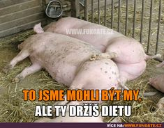 To jsme mohli být my, ale. Ale, Joker, Memes, Funny, Cheesecake, Education, Quotes, Quotations, Ale Beer