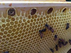 The Cathedral Hive® - Fully Assembled | Bee keeping, Bee ...