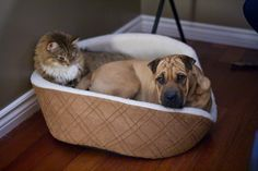 Stolen Dog Beds: 21 Pets Who Have Had Their Favorite Spots Usurped (PHOTOS)