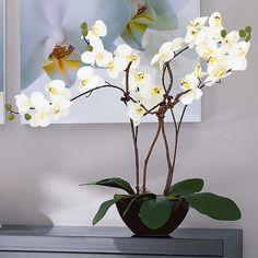 """Kunstpflanze Orchideentopf """"Modern"""""""