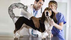 Dog Receives a 3D Printed Prosthetic Venomous Stinger & Other 3D Printing Jokes http://3dprint.com/51049/3d-printing-jokes/