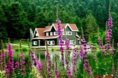 lake house no green tho