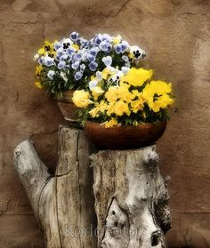 Google Image Result for http://www.shutterpoint.com/photos/K/491166-Flowers-on-a-Tree-Stump_view.jpg