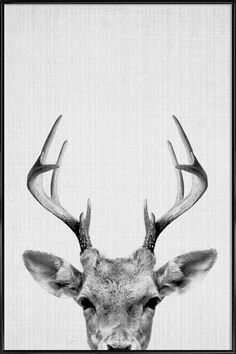 Print 38 - Deer print, deer head with antlers, woodlands nursery wall art, modern minimal black and white animal, kids room decor. A contemporary Art Mural, Wall Art, Framed Art, Framed Prints, Wall Decor, Painting Pictures For Kids, Pictures To Paint, Deer Print, Deer