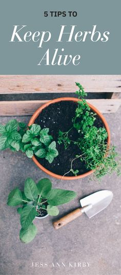 We wanted to re-share this post from a few years ago since it's the perfect time to grow your own herb garden. Having fresh herb plants to keep in your kitchen are not only handy, they help limit that extra trip to the store when your recipe calls for them. Here are five helpful herb growing tips to DIY and learn how to keep an herb garden alive this summer. Herb Plants, Garden Plants, Reduce Waste, Lifestyle Group, Grow Your Own, Go Green, Fresh Herbs, Herb Garden, Sustainability