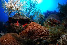 #coral #reef