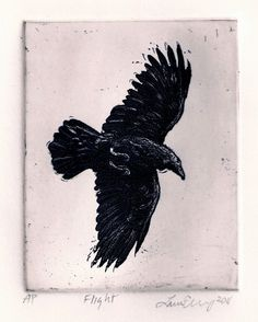 sale Raven crow. FLIGHT etching 4 inch x 5 inch by RAVENSTAMPS, $20.00