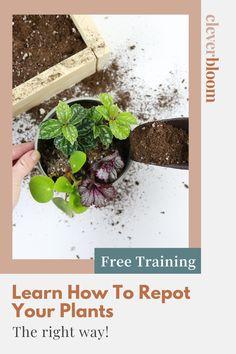 Veg Garden, Garden Art, Garden Ideas, Indoor Gardening, Indoor Plants, Lavender Garden, Cool Plants, Plant Care, Pest Control