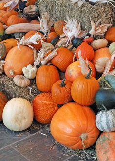 Information on growing pumpkins