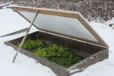 Cure the winter blues with spring greens cold frames.