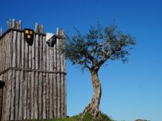 olive tree wooden walls