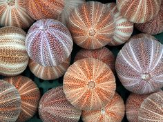 There's just something about sea urchins!