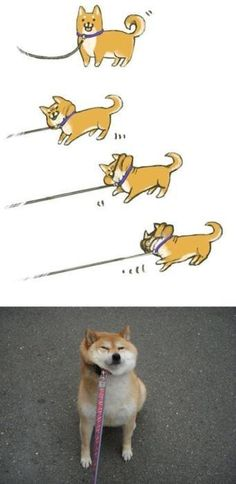 Shiba Inu. Sparky all the way.