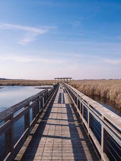 Escapade en Ontario #2 : Marcher sur l'extrémité du Canada au parc national de la Pointe Pelée Escapade, Canada, Parc National, Railroad Tracks, Ontario, Landscape, Travel, Scenery, Landscape Paintings