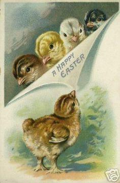 ❥ vintage Easter chicks card