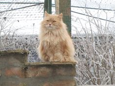 We first laid eyes on Attila in the spring of 2015, when he was a stray tom roaming the village, but he was extremely distrustful of people and impossible to catch. We caught him using a humane trap in December of 2015. He was around five years old and turned out to be FIV positive, but is cuddly and affectionate. He gets along great with other cats.