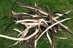 How to process willow bark for cordage making fibres - Surely one of the best cordage materials; Willow bark is both abundant and relatively easy to process Basket Weave Crochet, Basket Weaving, Willow Bark, Primitive Survival, Weaving Projects, Pine Needles, Hobby Farms, Felt Ornaments, Survival Skills