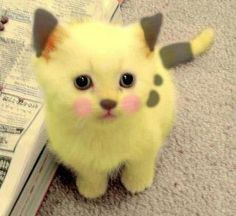 Pikachu tierno