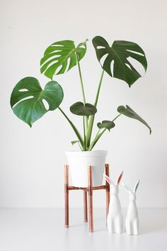 Copper plant stand and white planter with Monstera