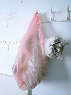 hi, im juz hanging outs in this bags watchin u showerz.