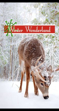 Winter wonderland iphone wallpaper. Reindeer. Snow