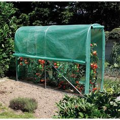 "Serre tunnel ""Tomato Greenhouse""pour potager - 3 x 1 x 2 m - NORTENE"