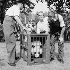 Chi-Chi the giant panda bear from Peking arrives at London Zoo 20 Month Old, Frank Martin, Become A Photographer, The Blitz, Chi Chi, Panda Bear, About Uk, The Past, Panda