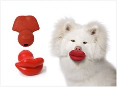 lips dog ball