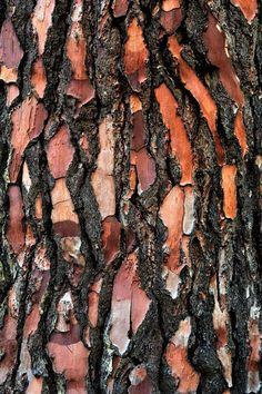 écorce d'arbre, tree bark, forêt de Fontainebleau Natural Forms, Natural Texture, Patterns In Nature, Textures Patterns, Drawing Sheet, Nature Artists, Abstract Nature, Tree Bark, Wood Texture