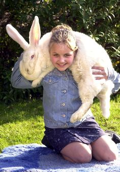 25 Giant Bunnies So Big They Could Destroy You: These bunnies are big as hell. And they're not sorry.