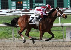 2011 Horse of the year Havre De Grace with Ramon Dominguez aboard pulls away from the field to take the 3rd running of the $150,000 New Orleans Ladies at Fair Grounds