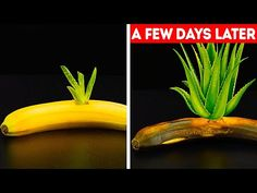 27 GARDENING HACKS YOU'LL WANT TO KNOW - YouTube