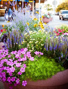 Flowers I would love to have in my front porch garden.