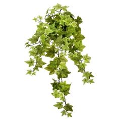Belle Ivy Hanging Bush, 34'' Art Supply Stores, Oriental Trading, Types Of Plants, Green Plants, Artificial Plants, Home Decor Outlet, Houseplants, Decoration, Ivy