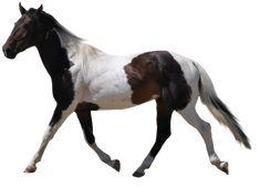 Pin Em Horses