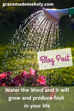 Your heart and mind are like a garden. Once the Word of God is planted there you want to water it with regular meditation on it so that it can change you. It will change you! Romans 15 5, Christian Post, Daily Wisdom, Serve The Lord, Life Challenges, Maturity, Heart And Mind, Life Coaching, Inspire Others