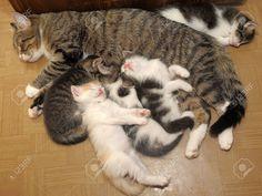 Cat Sleeping, Wake Me Up, Cats, Animals, Gatos, Animales, Kitty Cats, Animaux, Cat