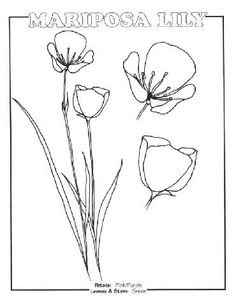 lily coloring pages | View Full Size Image: PDFVersion | ImageVersion